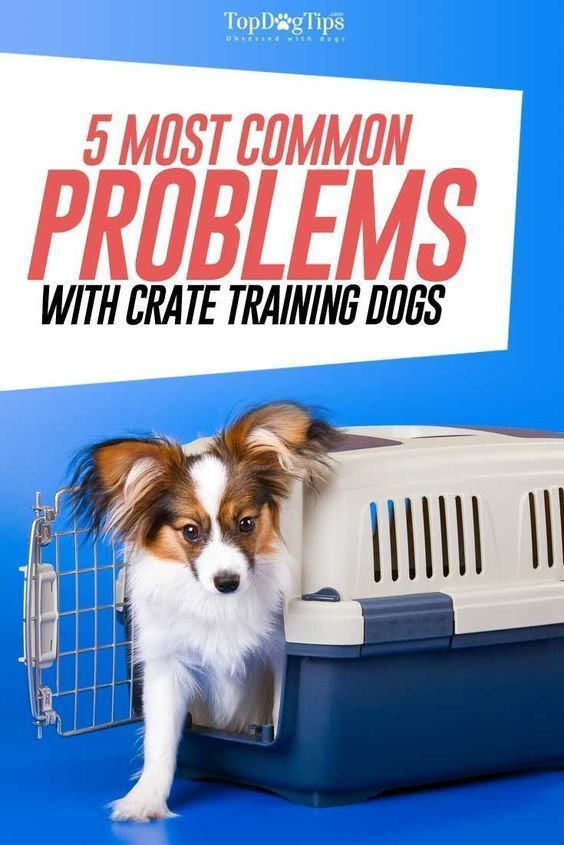 Pet owners know that crate training dogs is a great way to