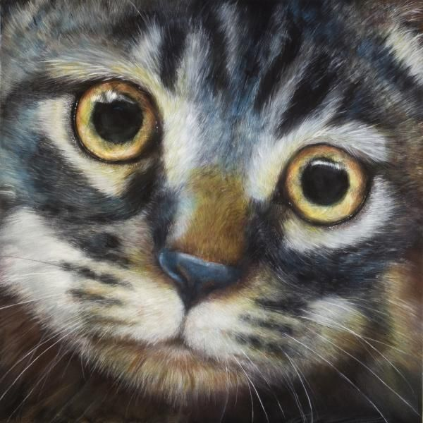 Tabby by Linnell Esler Cats, Cat drawing tutorial, Cat art