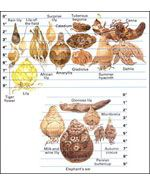 Summer Flowering Bulbs Planting Guide At The Home Depot Summer Flowering Bulbs Planting Bulbs Bulb Flowers