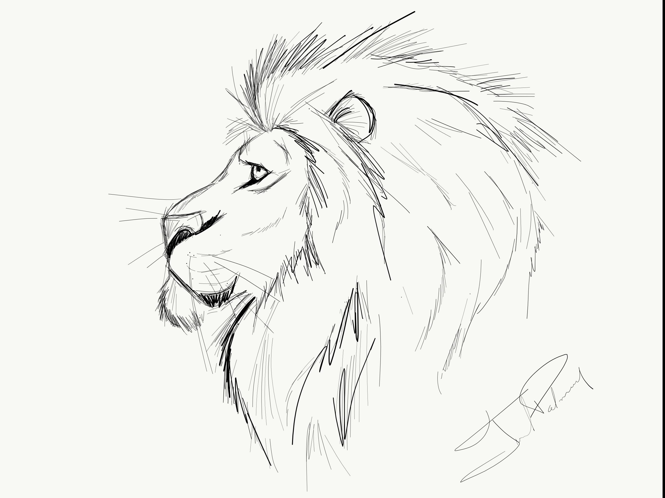 Fine Line Lion Sketch Lowe Skizze Zeichnung Inspiration Lowen Illustration
