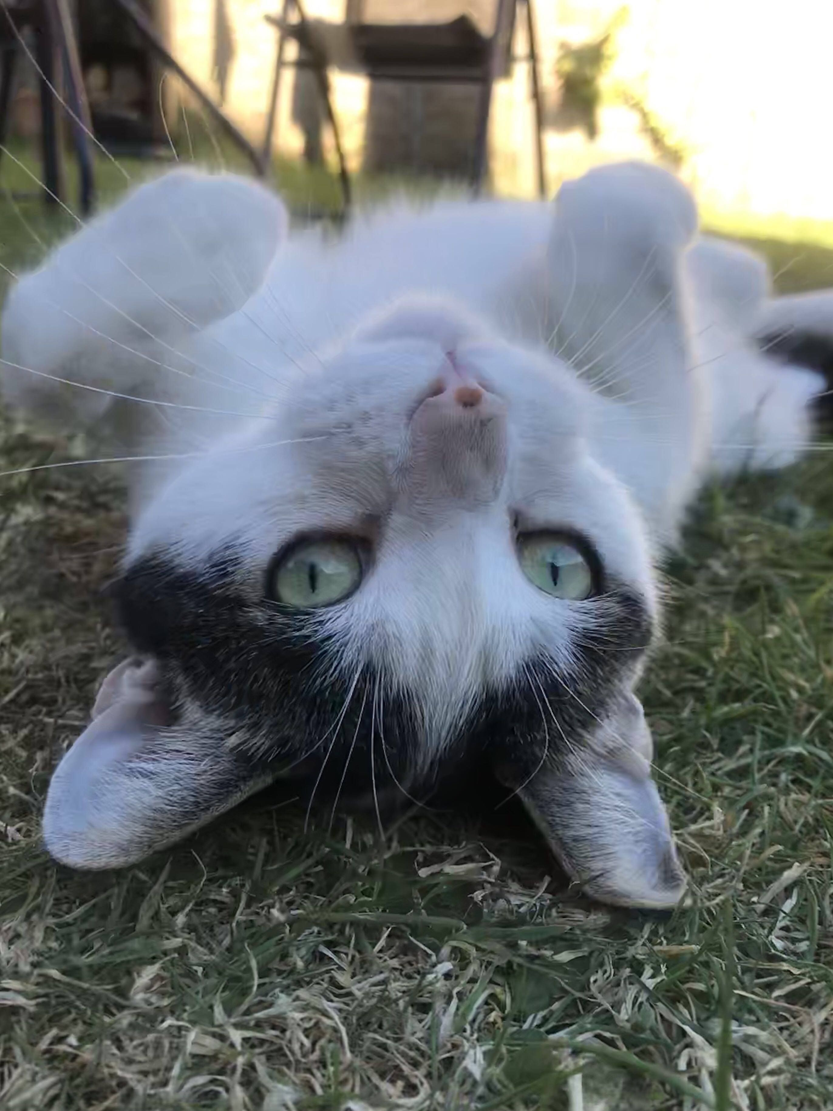 Modern Cat's Photo Contest Malley catsfluffy Cat