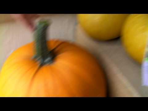 538 Zucchini Pumpkin Hybrid Cross Pollination Youtube