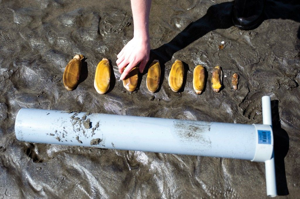 Razor clams 101 (With images) Clams, Razor, Things to do