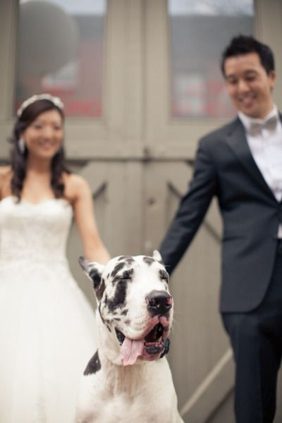 Harlequin Great Dane Nyc Wedding At New Leaf Restaurant From