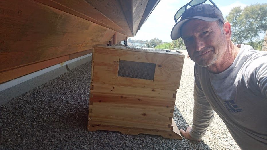 We are specializing in Live Removal of Bee Hive and Swarms