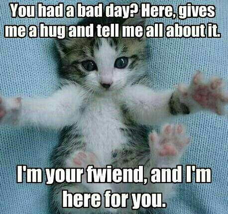 Pin By Kay Kimbrell Scott On Cheer Up Kittens Cutest Cute Funny Animals Cute Cats And Kittens
