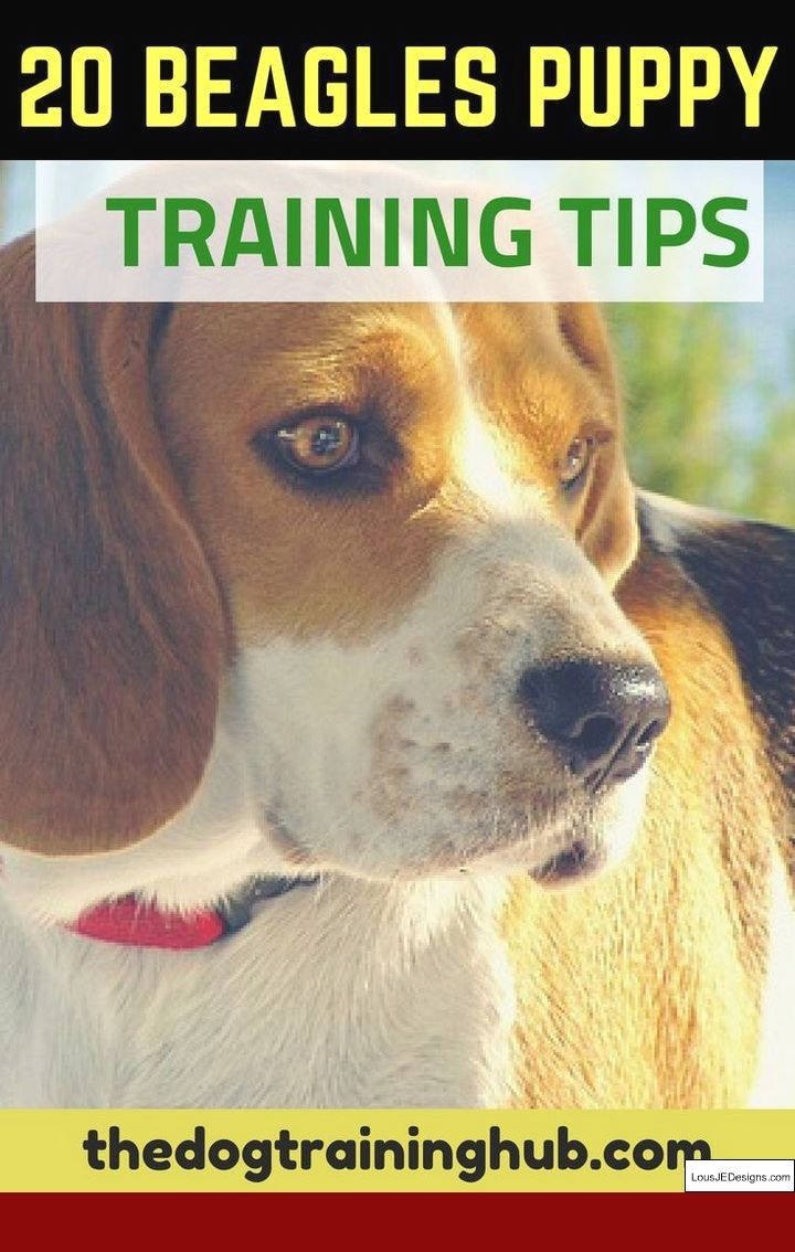 Best Way To Train Your Dog To Go Outside And Pics Of Training Your