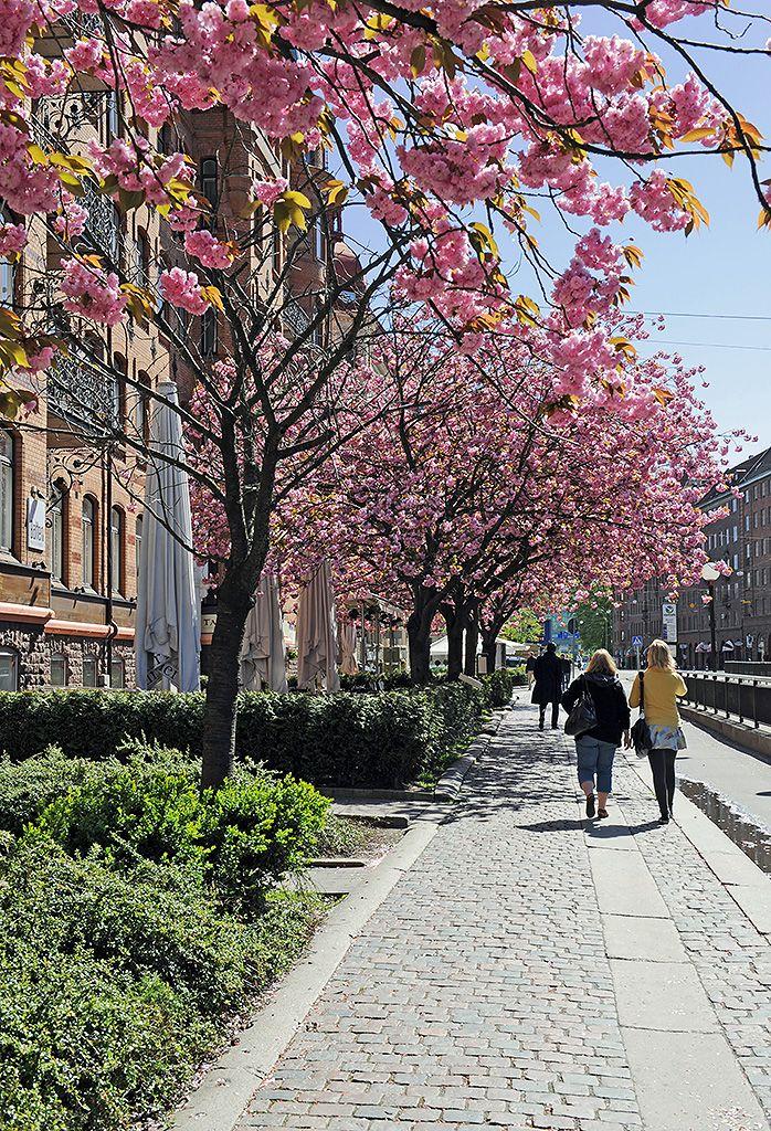Primavera em Lorensberg, Suécia.  Fotografia: Alvhem.