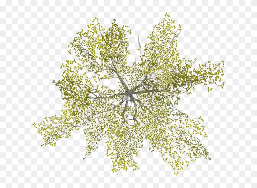 Find Hd Tree Png Plan View Tree Plan Png Plan Tree Photoshop Architecture Tree Plan Png Transparent Png To Search Tree Plan Png Tree Photoshop Tree Plan