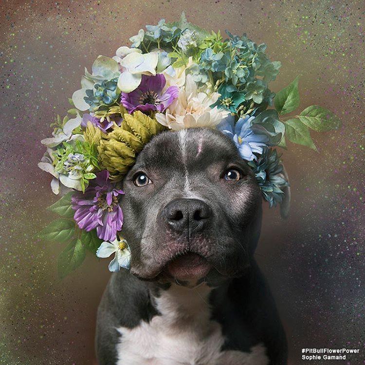 Ver Esta Foto Do Instagram De Sophiegamand 7 107 Curtidas Dog Flower Pretty Animals Dog Wedding