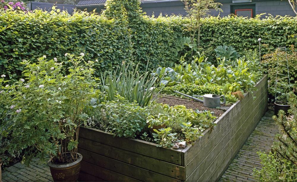Gemuse Fur Hochbeete Diese Sorten Eignen Sich Am Besten In 2020 Hochbeet Garten Pflanzen Bepflanzung