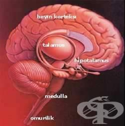 Безвкусен диабет е ендокринно заболяване, дължащо се на намалена секреция на антидиуретичен хормон от задния дял на хипофизата. Хипоталамичният инсипиден диабет е рядко заболяване. Причините за възни