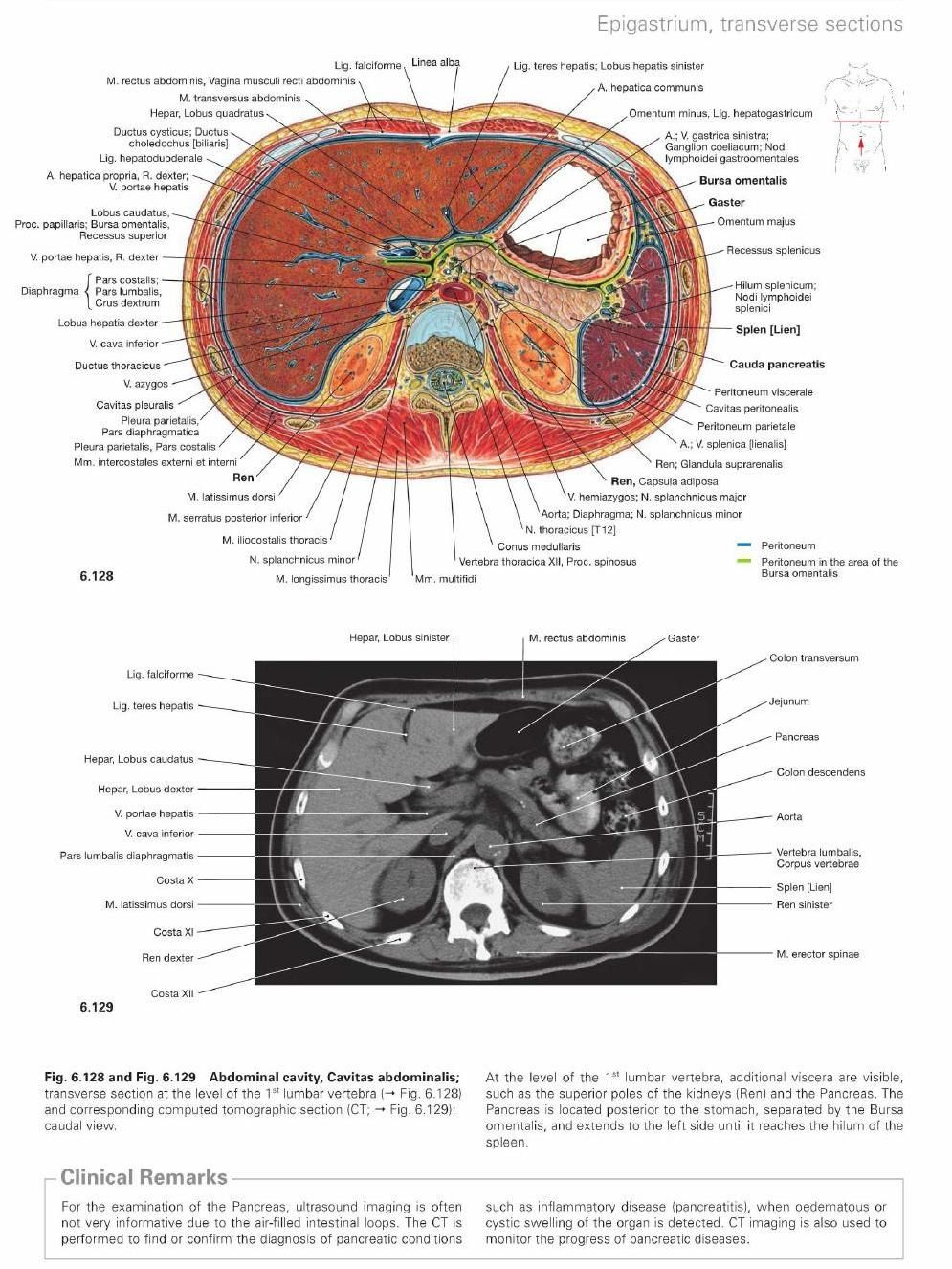 ClippedOnIssuu from Atlas of human anatomy | Radiography | Pinterest ...