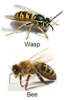 Wasp Nest Removal And How Stinging Insects Thrive In Autumn Wasp Wasp Nest Removal Bee