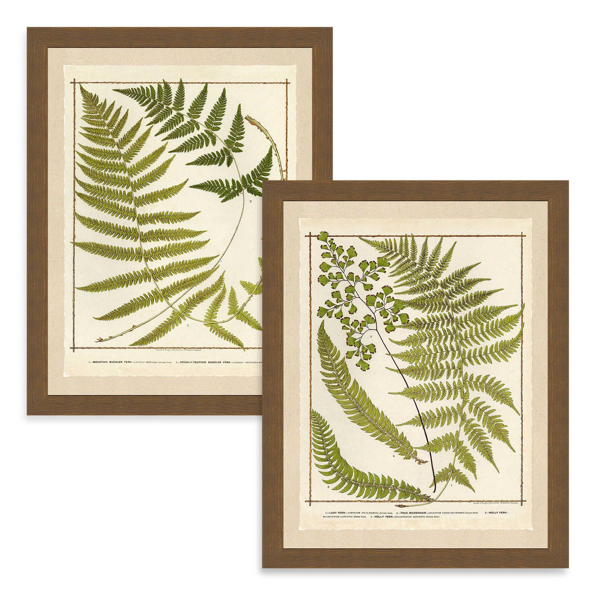 Ferns print framed wall art fern wall art botanical