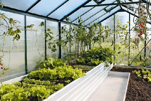 Gardenplaza - Gemüse und Kräuter im Hochbeet-Gewächshaus ziehen ...