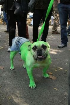 14 Adorable Dogs In Halloween Costumes [PICTURES] | Dog