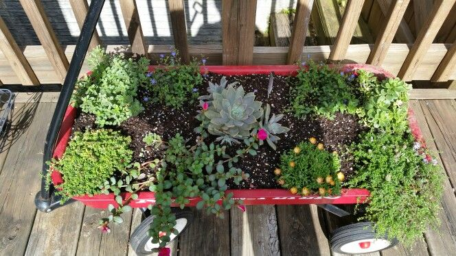 Wagon with succulents and steppable plants.