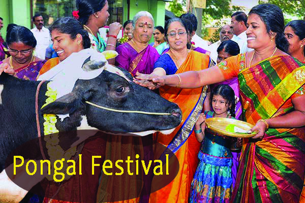 Pongal essay in hindi & short essay on pongal in hindi
