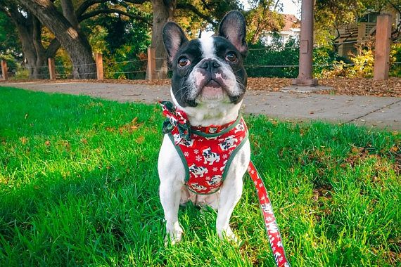 Christmas French Bulldog Dog Harness Boston Terrier Frenchie Dog