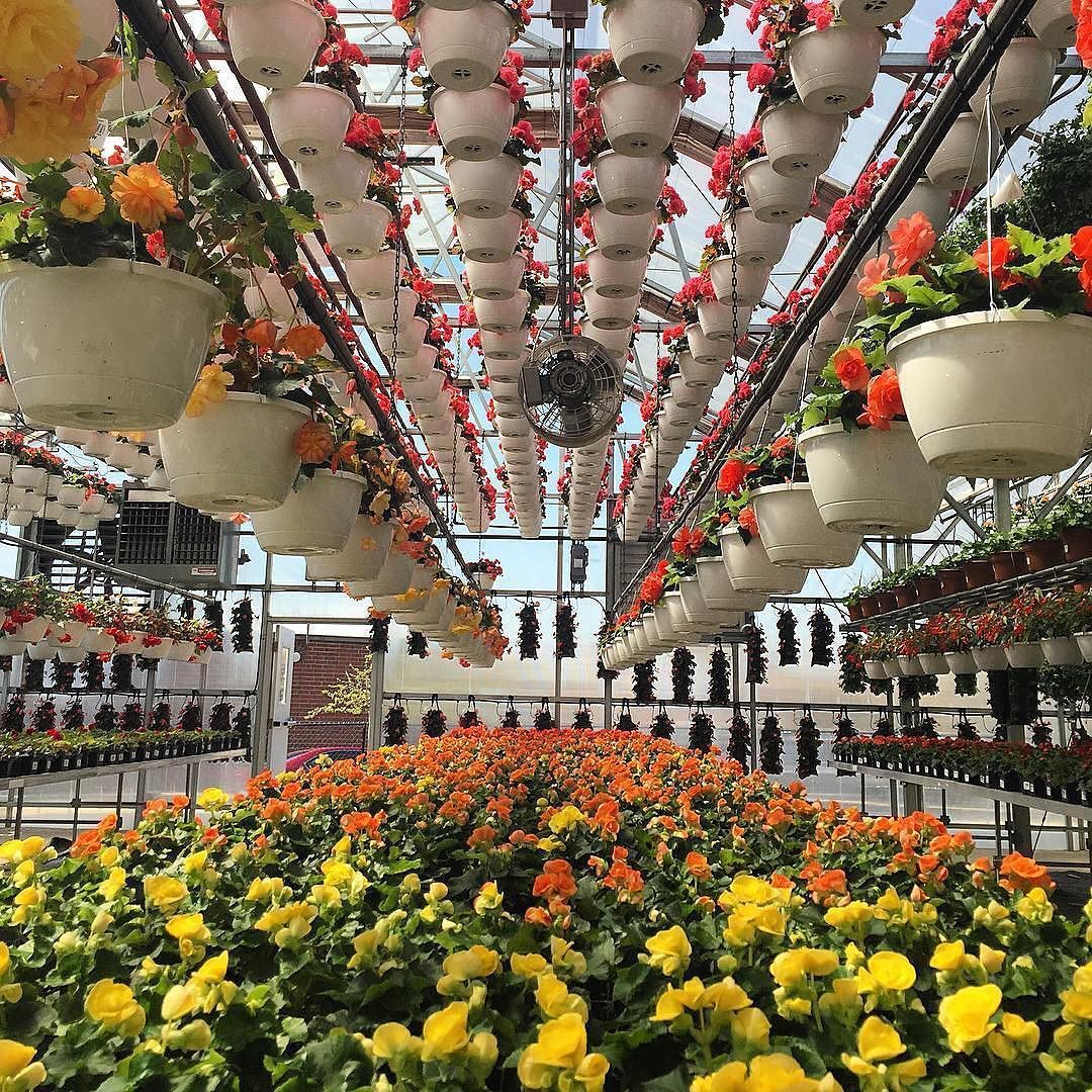 Flowers For Miles At Pesche S Nursery In Des Plaines Il Photo