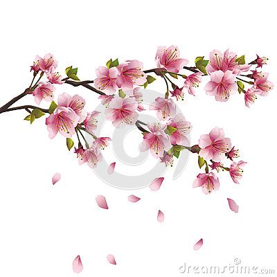 Photographs Scorching Blossoms Already Toggle Member Asian Bolts A Dating Cherry Gamble button will