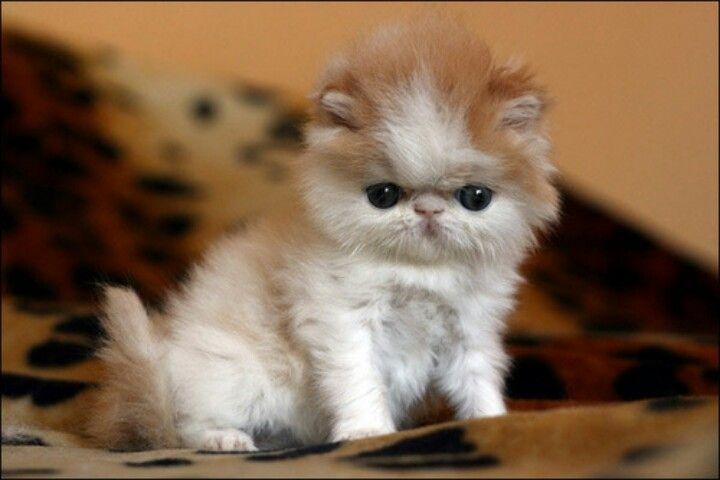 Baby face...u got the cutest little baby face...♥