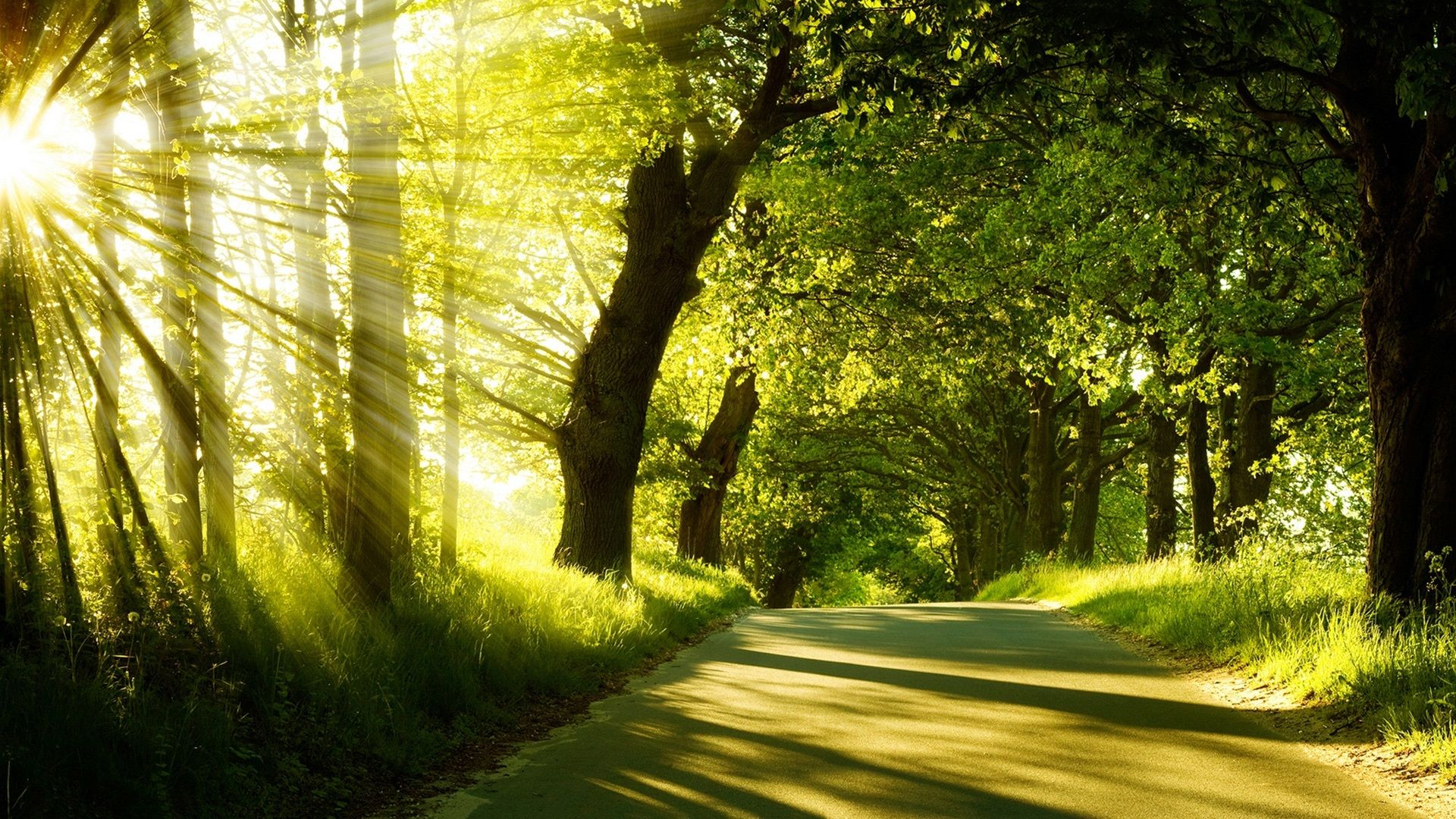 Sunrise Spring Forest Trees Road Wallpaper Sunrise Hd