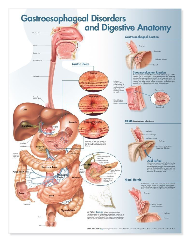 Gastroesophageal Disorders and Digestive Anatomy Anatomical Chart ...