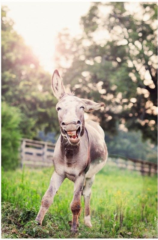 This is the best picture I've ever seen. What a happy animal!