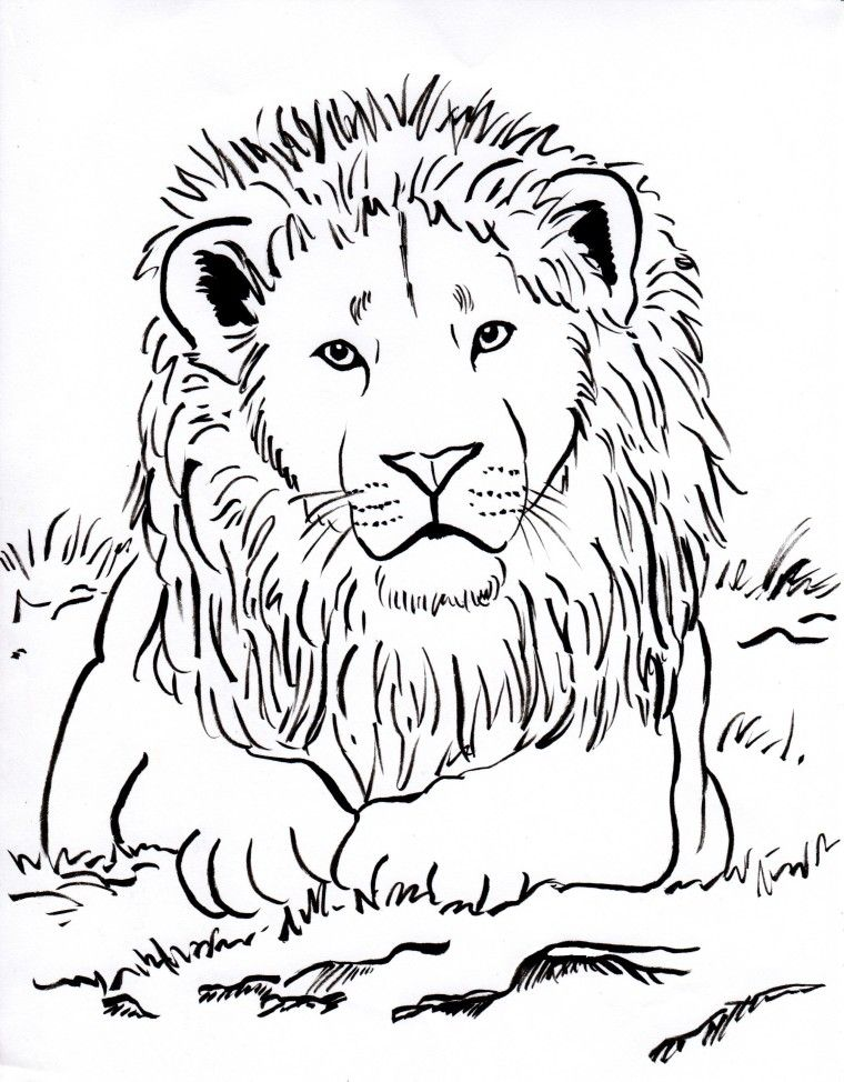 Lovely Week 3 Upside Down Lots Of Animal Coloring Pages Lion Coloring Page 001