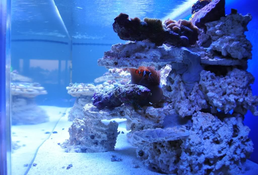 How to drill live rock? - Reef Central Online Community ...