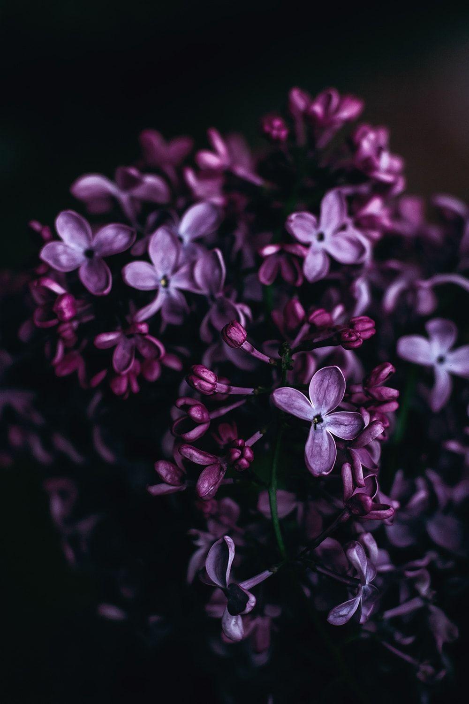 Working With Ultraviolet Purple Flowers Flower Photos Purple Wallpaper