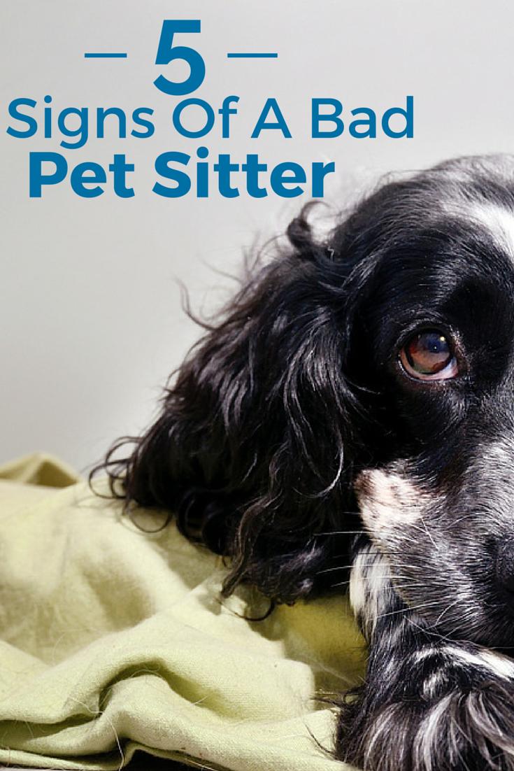 5 Signs Of A Bad Pet Sitter Pet Sitters Pet Sitting Business Pet Hacks