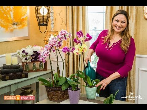 How To Make An Orchid Plant Rebloom Video Instructions Orchid