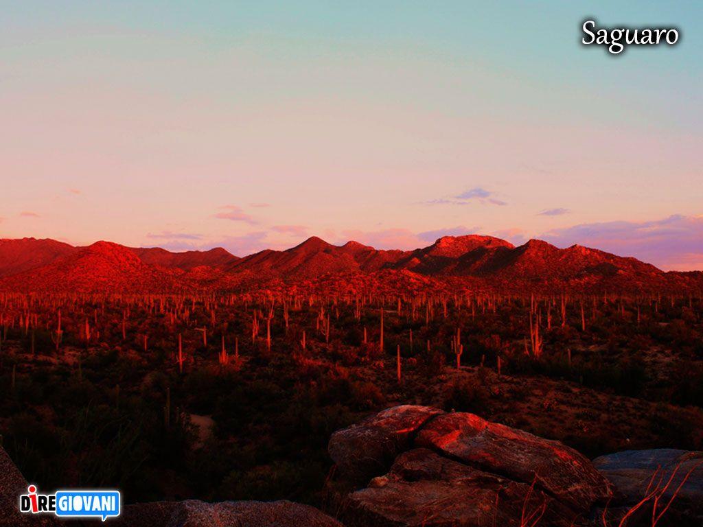 Saguaro National Park, Arizona - USA