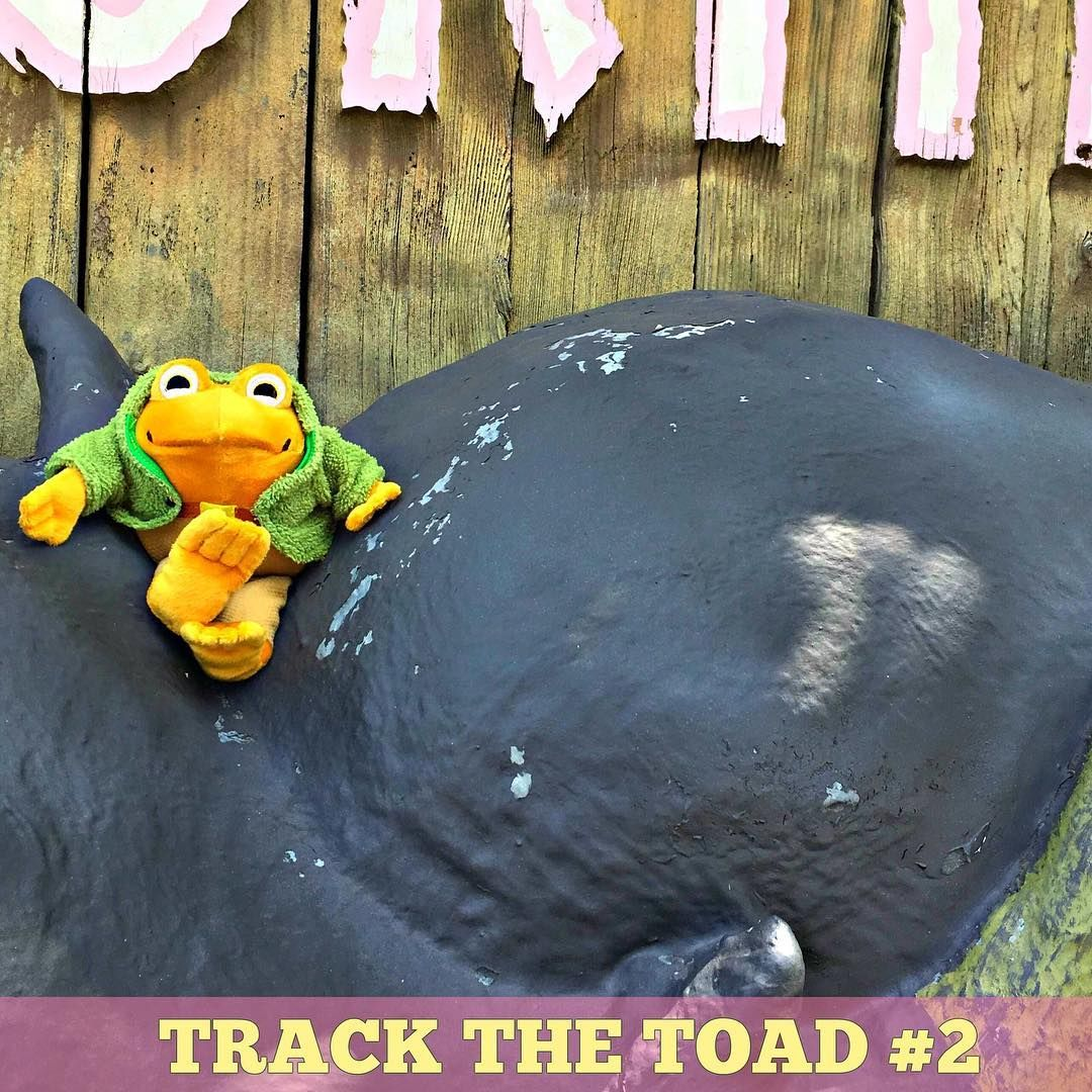Where Is Toad Hanging Out Today Trackthetoad Casamanana