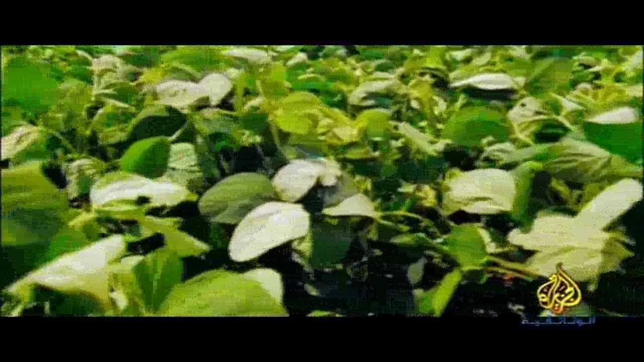 فيلم وثائقي ... صانعو التغيير في آسيا .... الطاقة المتجددة http://blog.amin.org/eyad