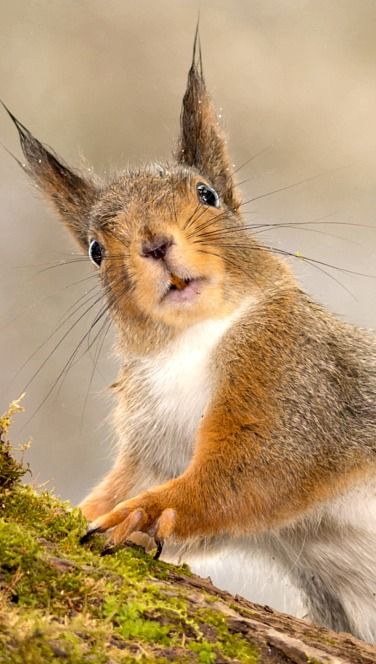 Huh? Did something Happen? Say the Squirrel. This face looks like is asking this question. (Huh? Did something Happen?)