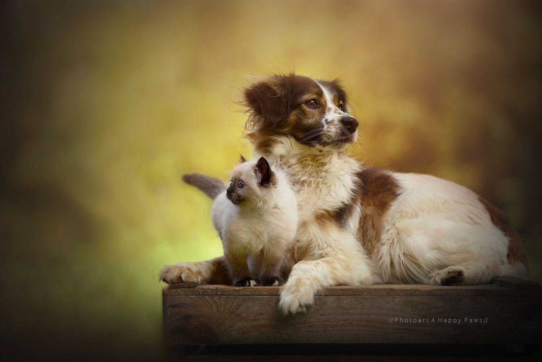 Friendship by Anne Geier
