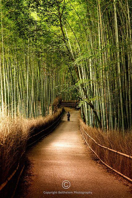 Path of Bamboo  Kyoto, Japan