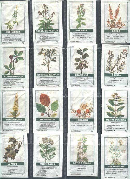 Imagenes de plantas medicinales y sus nombres imagui for Plantas de interior fotos y nombres