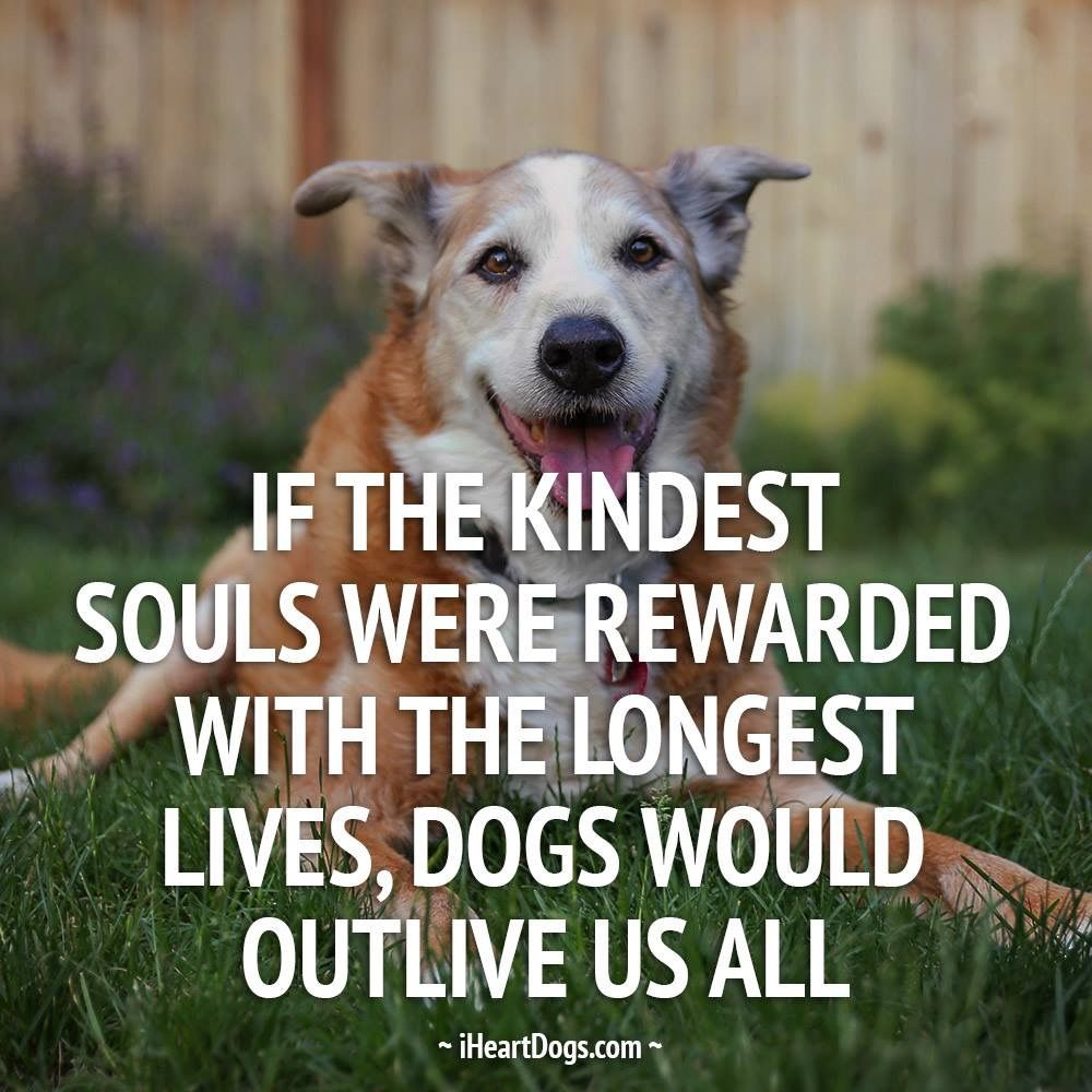 """""""If the kindest souls were rewarded with the longest lives"""