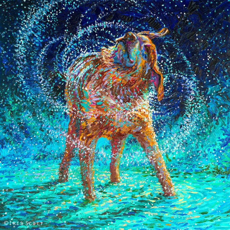 Old Rem   36x36in   SOLD - By  Iris Scott, shaking dog, wet dog, dog art, finger painting www.IrisScottFineArt.com