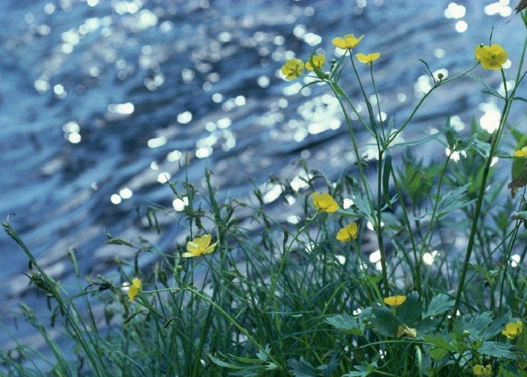 Free Backgrounds Spring Desktop Wallpaper Spring Wallpaper Desktop Wallpaper Summer
