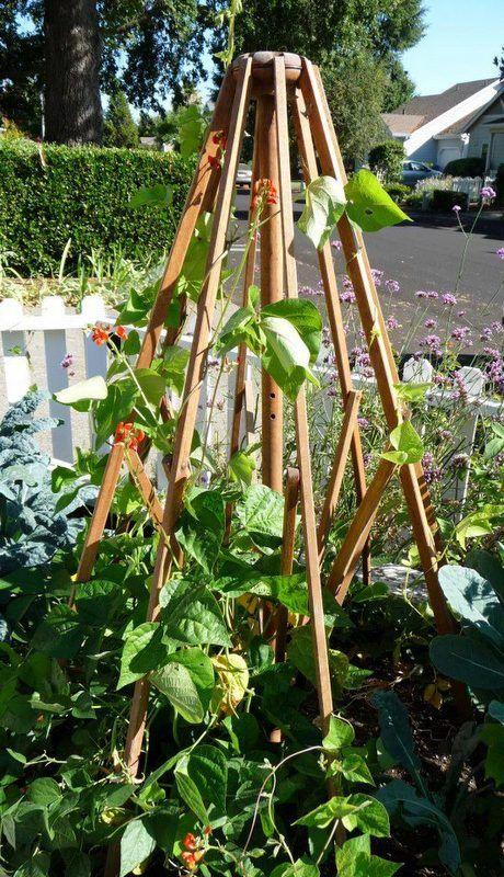 Attractive Repurpose Your Old Patio Umbrella Frame In Your Garden.
