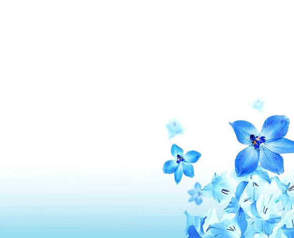 خلفيات بوربوينت 2020 Hd ناعمة وهادئة بدون حقوق Flower Backgrounds Bubbles Wallpaper Floral Border Design