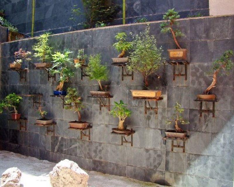 bonsai garden. vertical bonsai garden by alex lamb