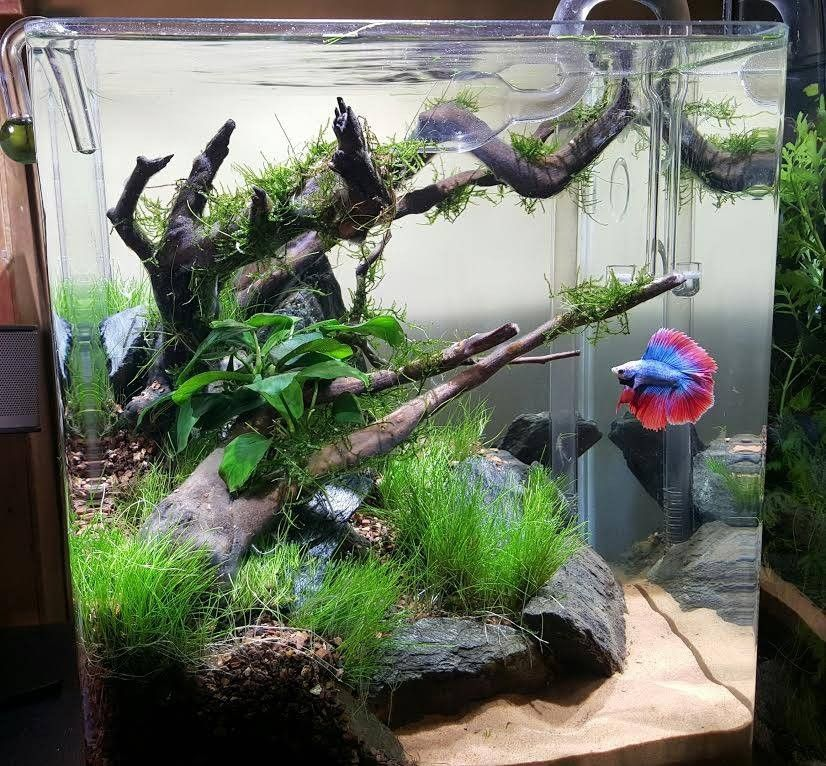 Planted tank scenic cove by brian murphy aquascape for Kampffisch aquarium