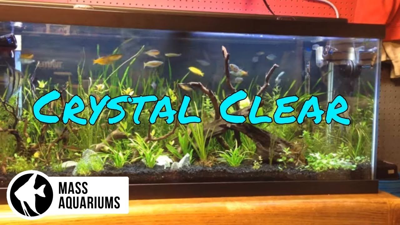 How to Keep Crystal Clear water in your Aquarium/ Clean